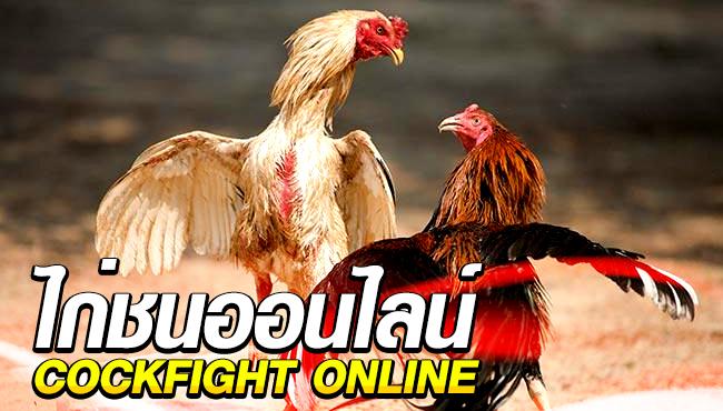 วิธีการเล่นพนันไก่ชนออนไลน์ COCKFIGHT Online